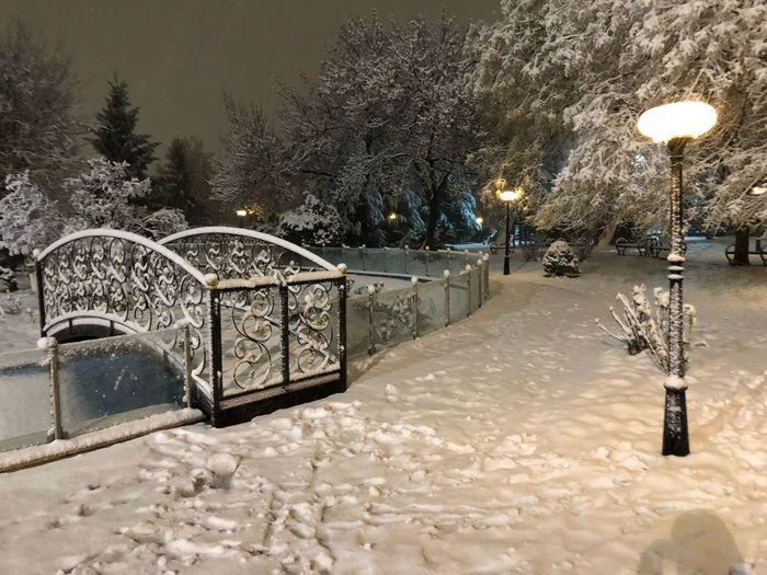 Winter Perfect