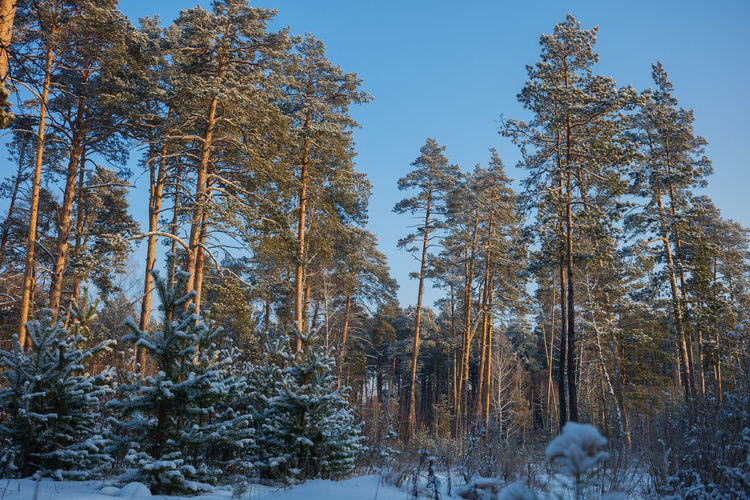Low angle view of trees during winter