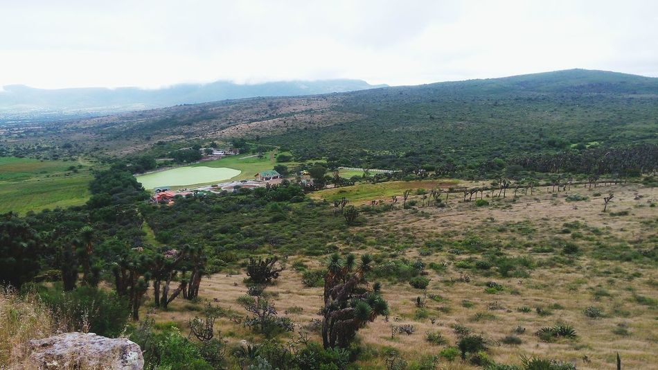 Tree Agriculture Landscape Nature Growth Outdoors Rural Scene Queretaro, Mex. Querétaro CadereytaPuebloMágico Cmh