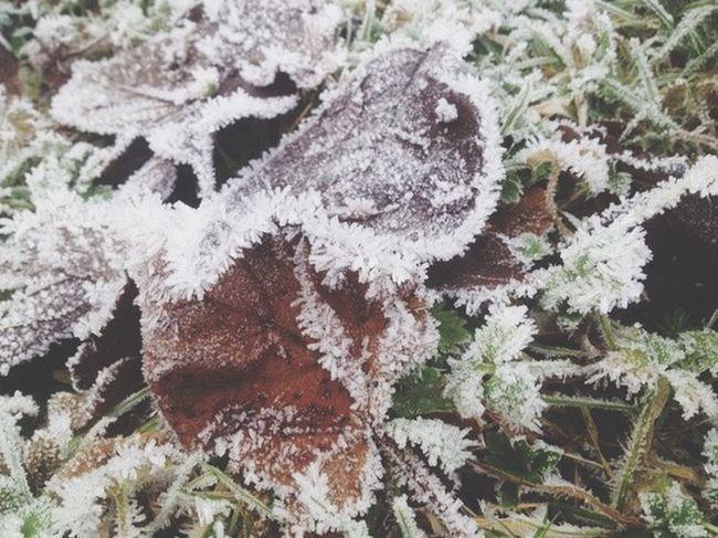 Frosty morning🍃❄️