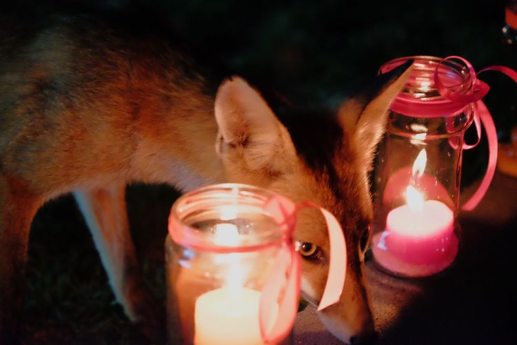 The Fox Wedding Nature Wedding Nigth  Picoftheday Nervous Eye4photography  Focus EyeEm Nature Lover