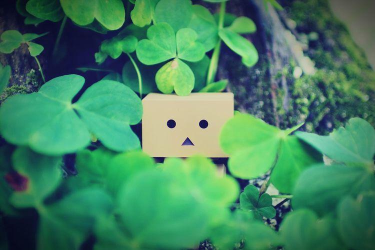 四つ葉のクローバーなんて無かった。 Danbo Clover Close-up Green Nature Relaxation EyeEm Gallery Cheese!