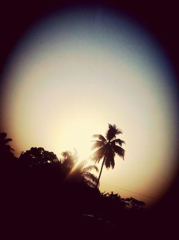 Showcase: January Sunset. Palmtrees. Nature At Its Peak.
