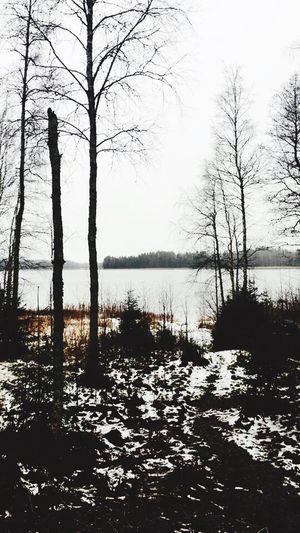 Meditation view Suomi Finland Landscape Snow Lake Water Bare Tree Winter Nature Tree Reflection