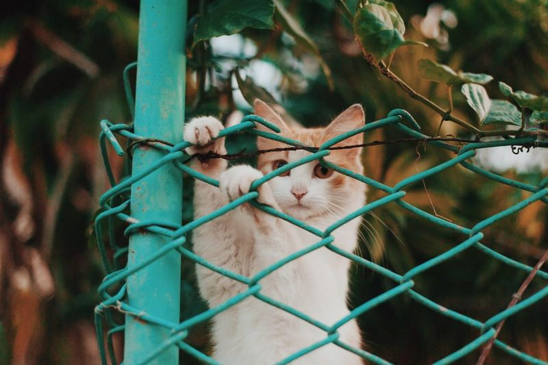 Cat on the fence Cats Of EyeEm Cuba Cuba Collection Animal Themes Cat Cats Close-up Cuban Life Fence Nature No People One Animal Pets Petstagram