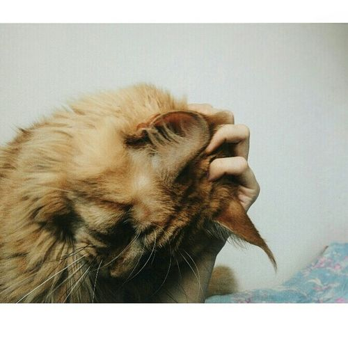Cat♡ Pets Love постельный режим Hello World Vscocam Faces Of EyeEm