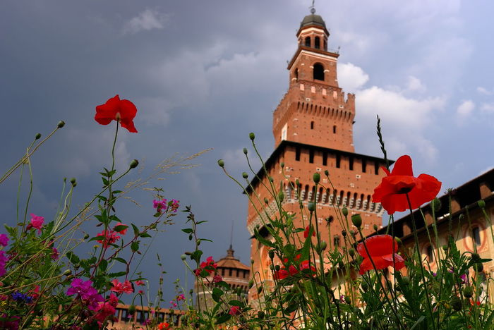 May Milano Parco Sempione Architecture Beauty In Nature Building Exterior Built Structure Castello Clouds And Sky Flower Freshness History Italy Plant Poppies  Poppy Red Poppy Travel Destinations