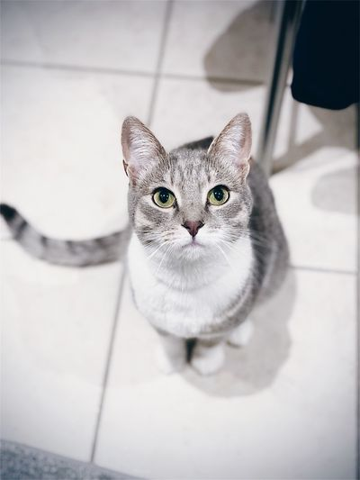 Portrait of cat sitting on floor