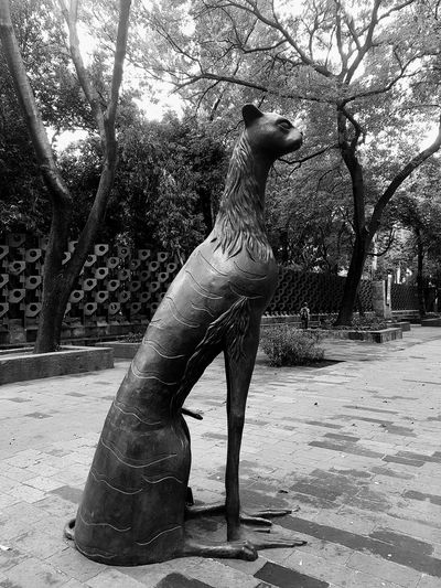Sculpture Leonoracarrington Mexico City Mexico Cat Blackandwhite