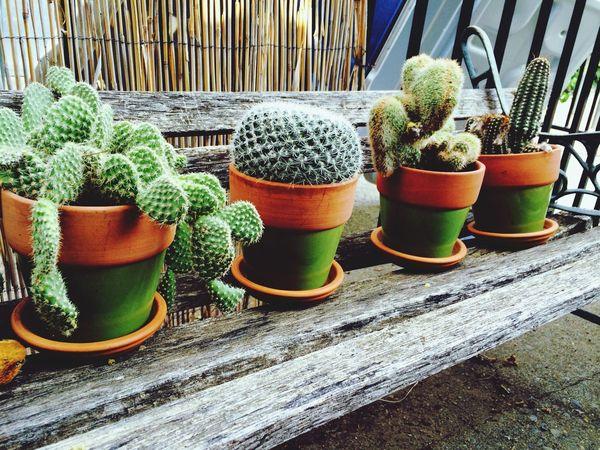 ?? Cactus Green Cute Babys