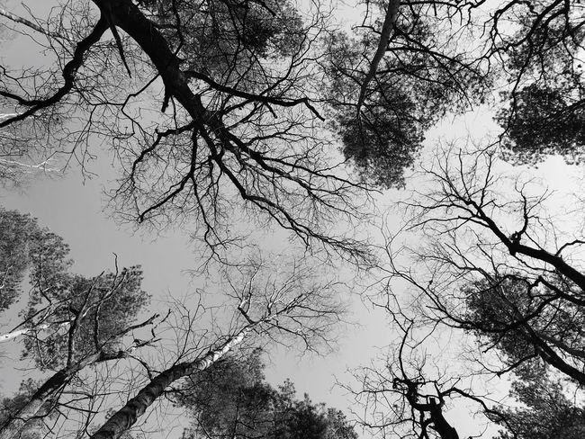 Black And White Photography Blackandwhite Photography Black & White Blackandwhite Nature Photography Nature_collection EyeEm Nature Lover EyeEm Best Shots Wälder Waldspaziergang Wald Forrest Nature Forrest Photography Forrest Beauty In Nature Tree Silhouettes Tree Silhouette Trees In The Sky Tree Tree Low Angle View Branch Nature Beauty In Nature Bare Tree Tranquility Outdoors Tranquil Scene Sky
