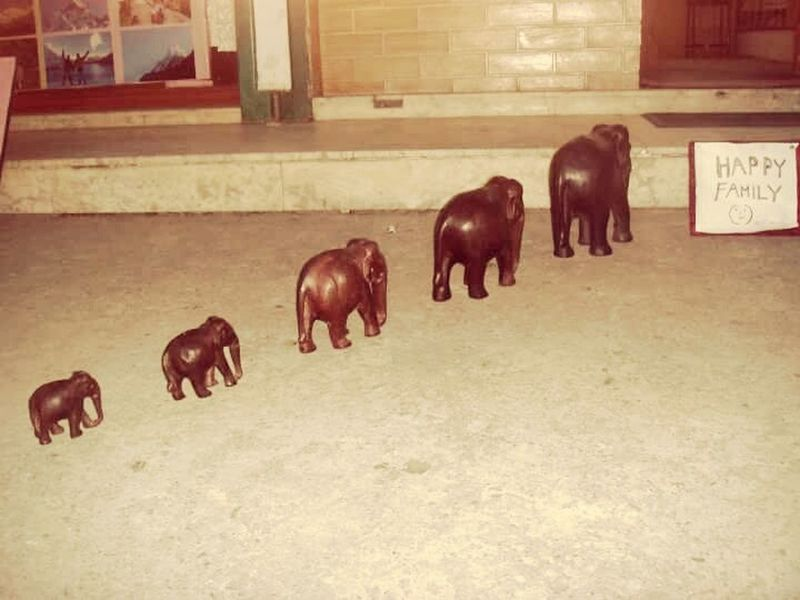 Hanging Out Happy Family! ❤ Elephants Cute Animals Pokhara Nepal Travel Photography Street Photography