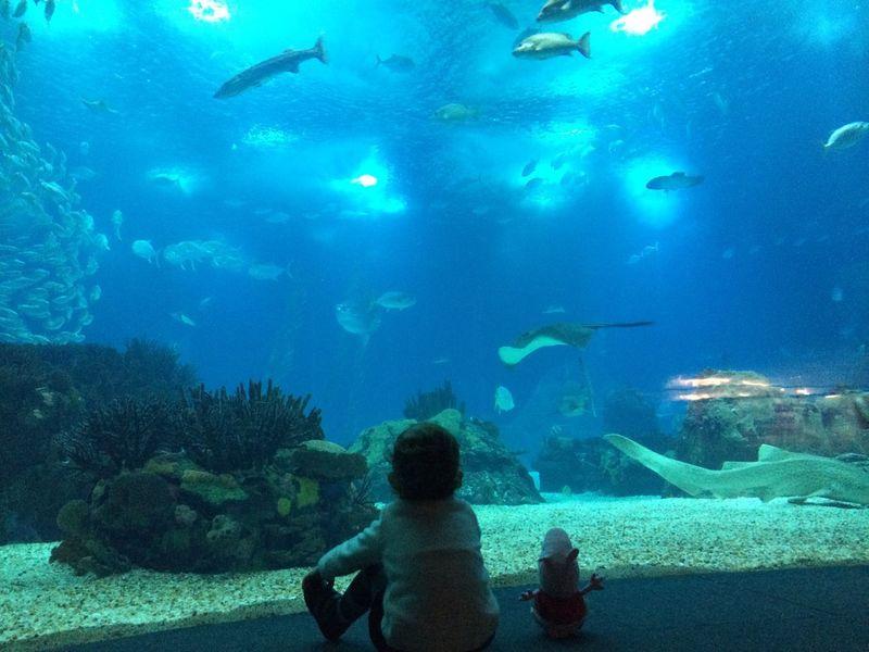 Ocean Aquarium Photography Child Water Lisbon Fish Life