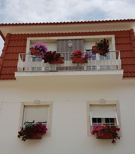 Low angle view of potted plants outside house