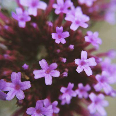 Flower Nature EyeEm Nature Lover Macro
