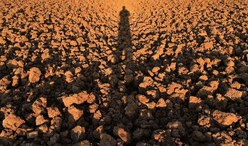 Shadow of people on field
