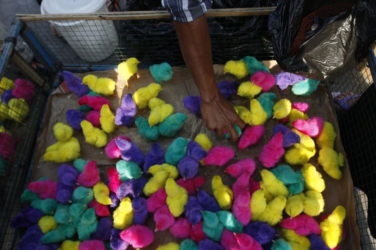 Colorful chickens in Indonesia. One Person Multi Colored High Angle View Real People Food Abundance Working Container Large Group Of Objects Day Occupation Business Food And Drink Retail  Market Human Body Part Basket Small Business Men