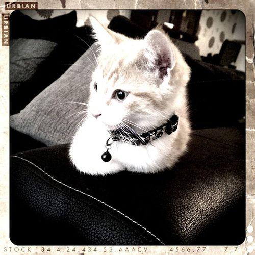Good Morning Mörk Kittensofinstagram Kittylife Lazysunday