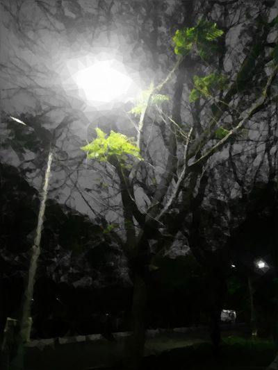 Somesidiousphotography Serious Equals Sidous Wordplay MyPhotography Hello World Lowpolyart Lowpolyedit Colorsplash Eye4photography  EyeEm Nature Lover EyeEm Best Shots