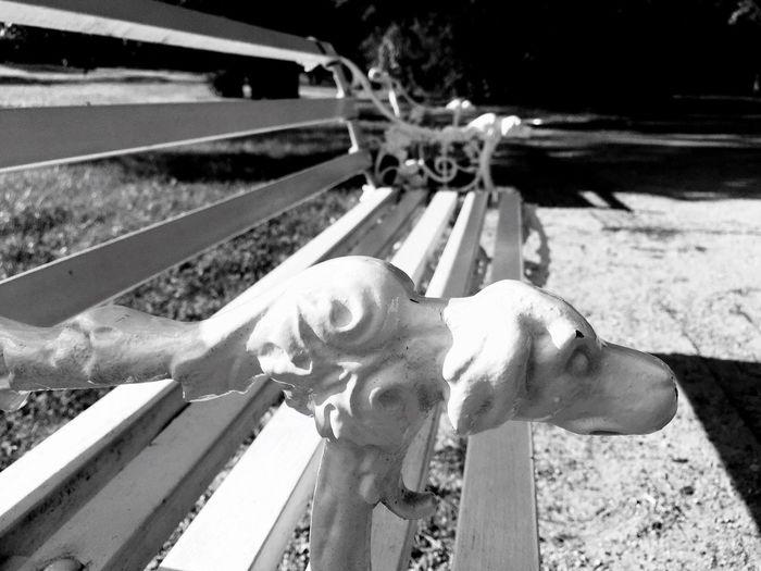 Black And White Friday Dog Bench Park Wilanów Tadaa Community Warsaw Poland Blackandwhite