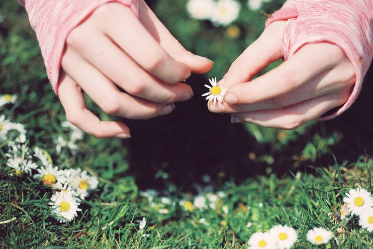 Cropped hands of woman holding flower on grass