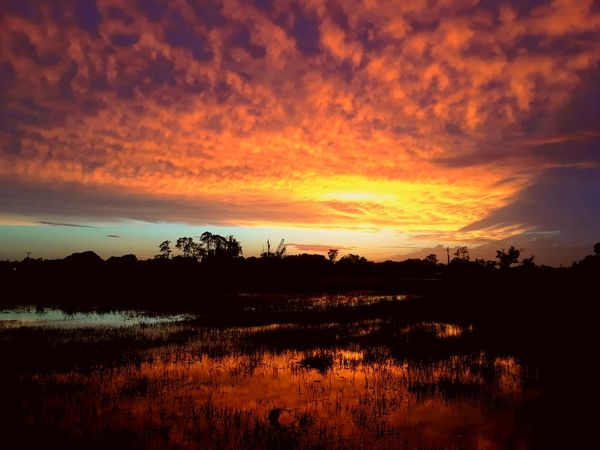 beauty after the storm HUAWEI Photo Award: After Dark Tree Sunset Multi Colored Silhouette Red Sunlight Dramatic Sky Water Sky Landscape Atmospheric Mood Storm Cloud Calm Romantic Sky
