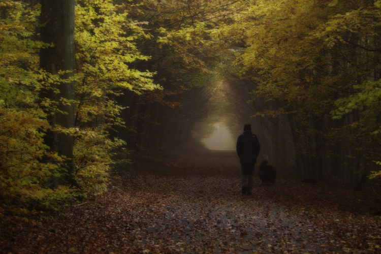Rear View Of Man With Dog Walking On Footpath In Forest During Winter