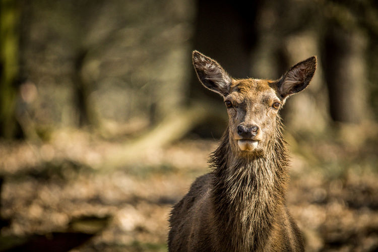 Deer Richmond