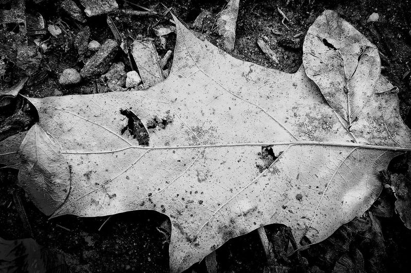 IPhoneography Nature Bw_collection Macro Photography