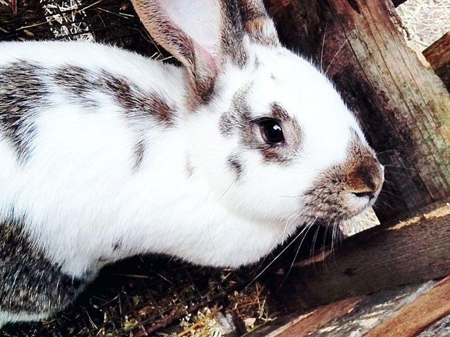 Кролик :) First Eyeem Photo