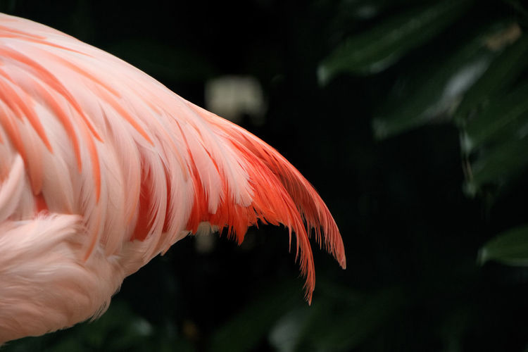 ein Flamingo einmal anders Water Nature Animal Bird Day Outdoors Underwater Flamingo Plant Marine Close-up Beauty In Nature Tierpark No People Animals In The Wild Pink Color Animal Themes One Animal Focus On Foreground Animal Wildlife Vertebrate Premium Collection Getty Images
