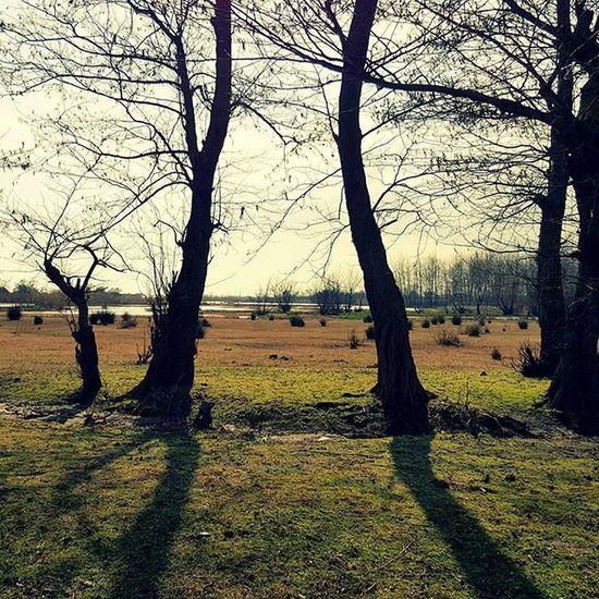 Nature Tree Trees Shadow Lake Grass Clouds Sunny Winter Iran Gilan Talesh Lisar