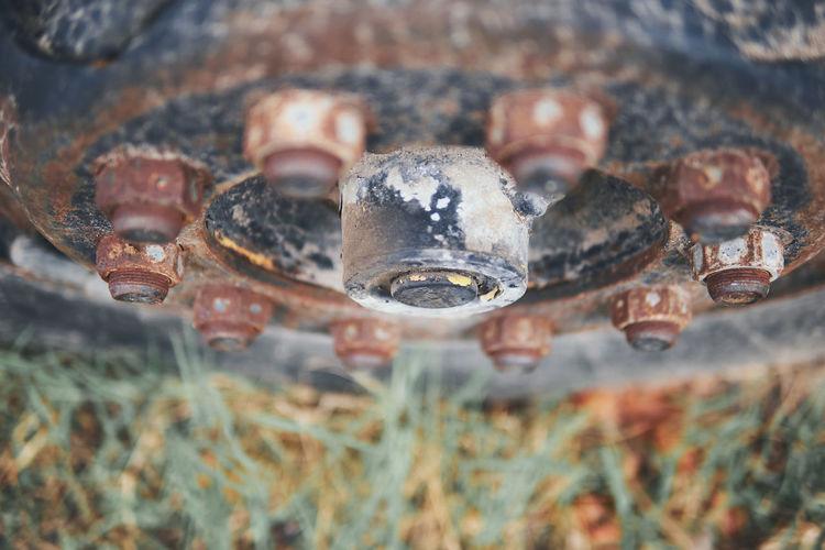 Close-up portrait of snake on field