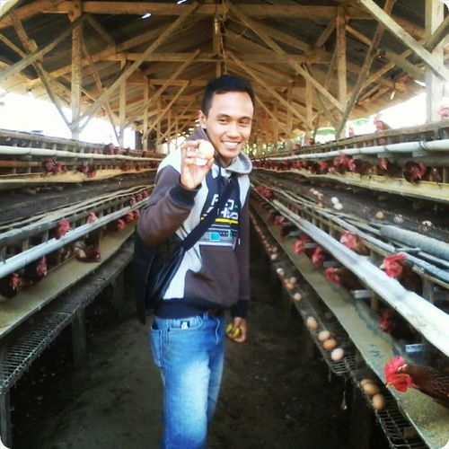 Egg Chicken Expedisi