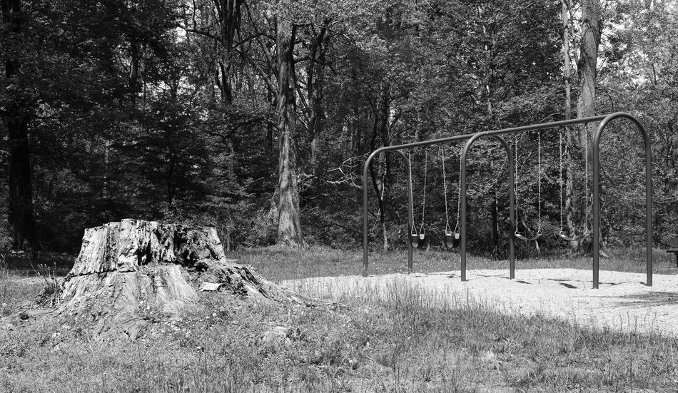 Life in play by Kesi J. Marcus Beauty In Nature Day Forest Nature No People Outdoors Park Playground Stump Swings Tranquility Tree Tree AI Now The Great Outdoors - 2018 EyeEm Awards