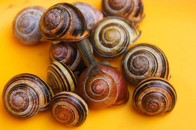 High Angle View Of Snails On Yellow Table