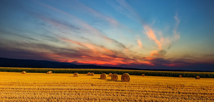 gold rollers... Hay Bale Haystack Agriculture Bale  Beauty In Nature Cloud - Sky Environment Farm Field Harvesting Hay Hay Bales Land Landscape Nature No People Plant Rollers Rural Scene Scenics - Nature Sky Straw Sunset Tranquil Scene Tranquility