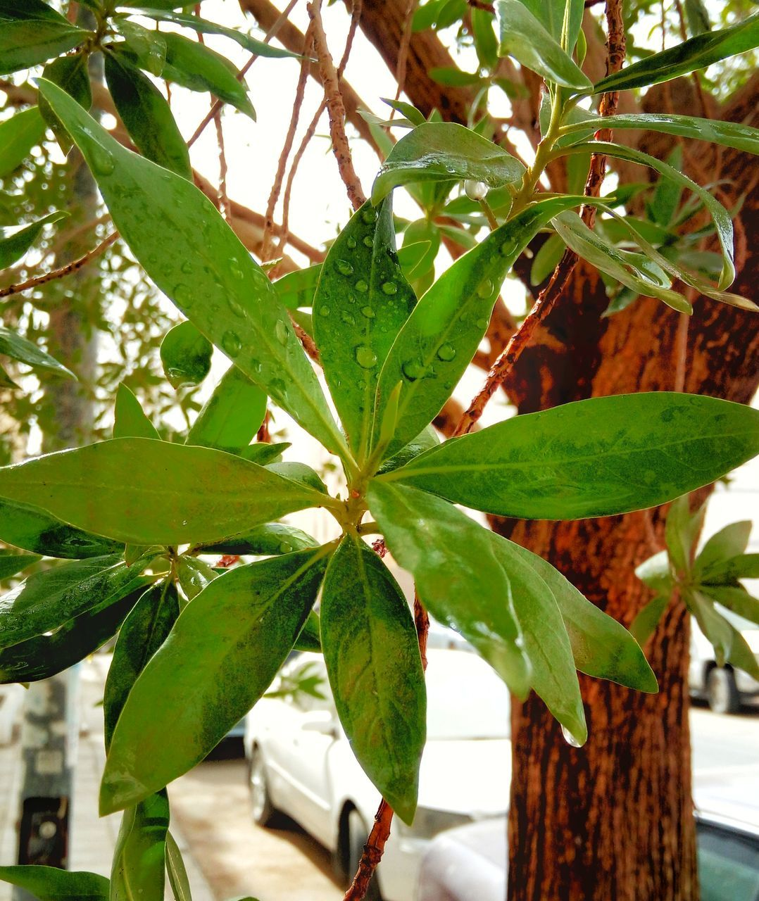 leaf, green color, growth, plant, close-up, nature, no people, day, outdoors, beauty in nature, tree, freshness