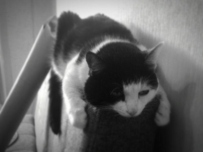 Cat котэ всетлен