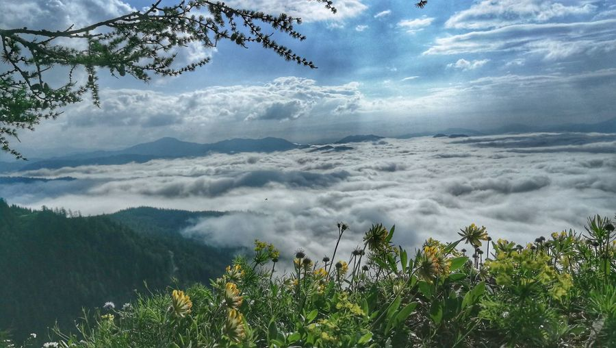 Horizon Over Clouds Tranquil Scene Beauty In Nature Hiking Tree Mountain Blue Dramatic Sky