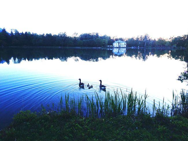 ヨーロッパ のどかな風景 湖 Salzburg 親子 かも See Lake Family Familie Sound Of Music