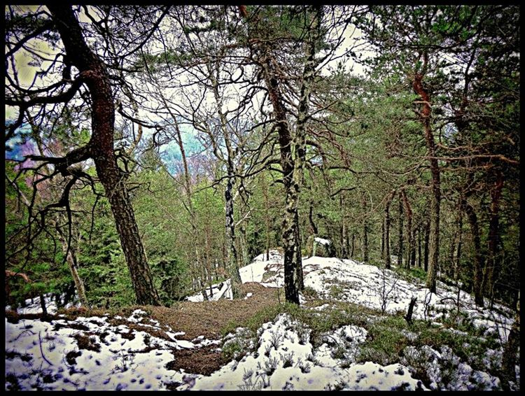 Luzickehory Mountains Rock View EyeEm