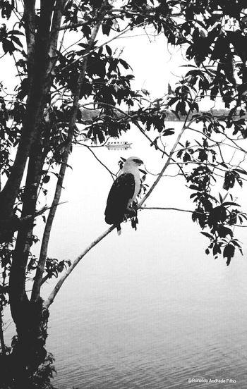 Amazonia Amazonas Novoairao Anavilhanas ??✌✌❤