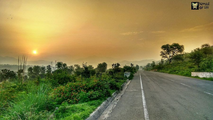 This view right here makes early morning ride totally worth it... Tree The Way Forward Sunset Diminishing Perspective Sun Grass Outdoors Landscape Nature Beauty In Nature Road Green Color Cloud - Sky Sky No People Scenics Rural Scene Day Tree Area Green Color Caferacersofinstagram Low Angle View Tranquility Transportation Travel Photography