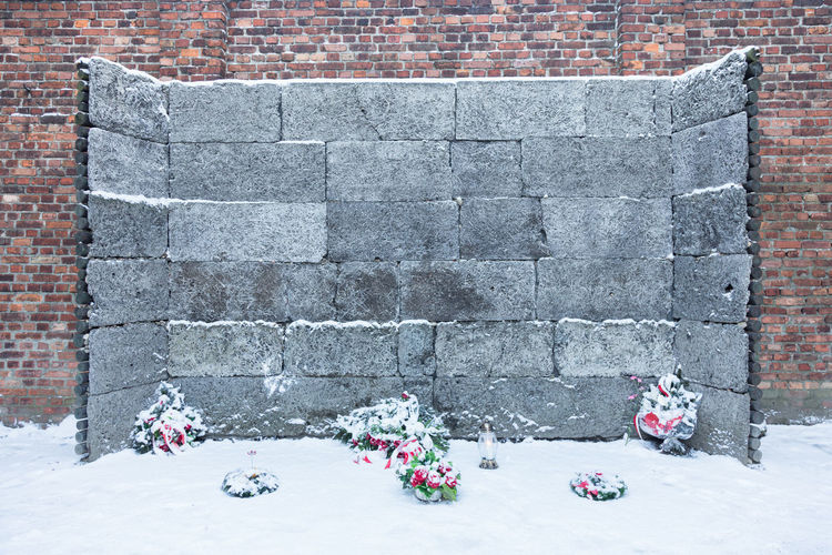 Jews Jewelry Jewish Jewish Memorial Shoah Holocaust Holocaust Memorial Memory Day Religion History Second World War Plant No Place Like Home No People Poland Auswitch Birkenau Birkenau Memorial Cemetery Zyklon B Rest In Peace Neveragain