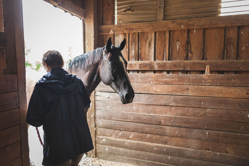 Adult Animal Animal Themes Barn Day Domestic Animals Horse Horses Indoors  Mammal One Animal One Man Only One Person People Pets Rear View Stable