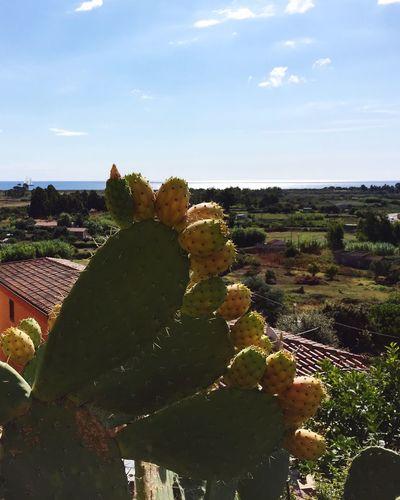 Holidays Sardinia,italy Fichi D'india