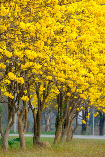 Yellow Tree Plant Beauty In Nature Nature Day Land No People Landscape Autumn Outdoors Freshness Environment Growth Grass Scenics - Nature Emotion Tranquility Flower Non-urban Scene