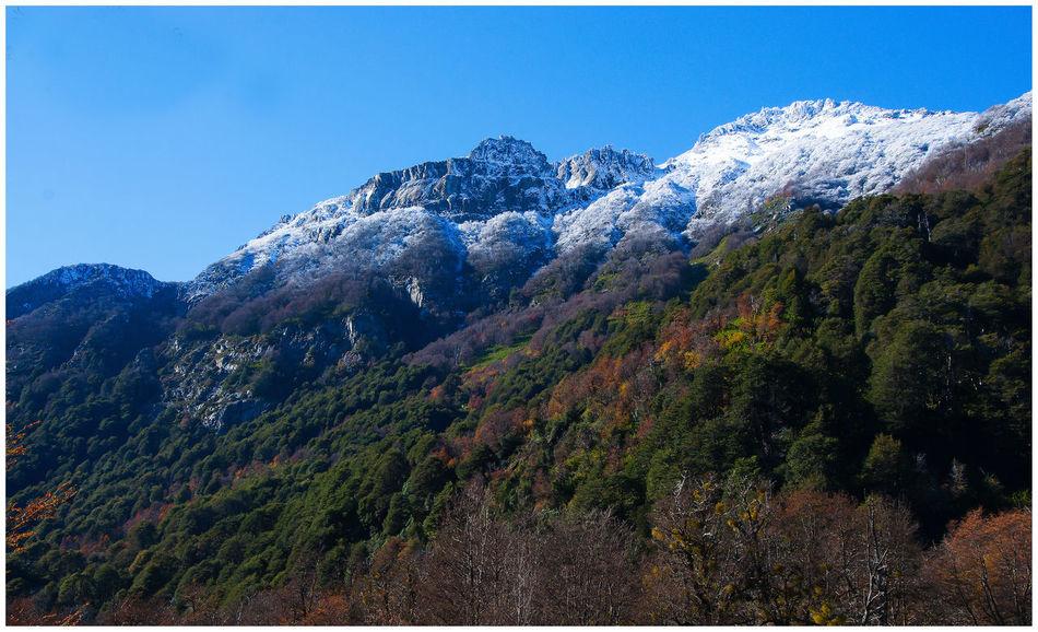 Hermosa Paleta de colores con Una Explosión de Colores .Camino a 7 Lagos , Patagonia Argentina Beauty In Nature Clear Sky Forest Mountain Mountain Peak Nature Tree