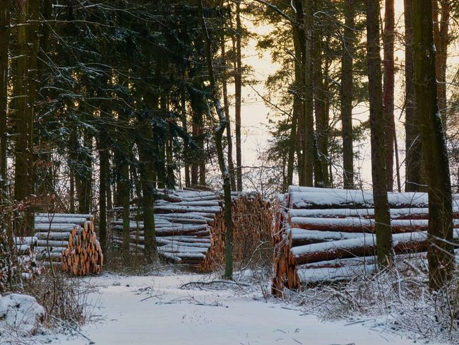 Hochwald Schneelandschaft Beauty In Nature Cold Temperature Day Forest Growth Holzeinschlag Landscape Nature No People Outdoors Scenics Snow Tranquil Scene Tranquility Tree Tree Trunk Winter Winterwald